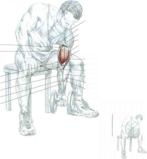 Pronator Teres Strengthening Exercises