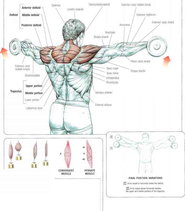 Lateral DumiBell Raises - Abdominal Muscles - Fitness VIP