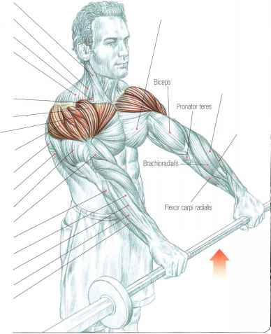 Back exercises at home with barbell