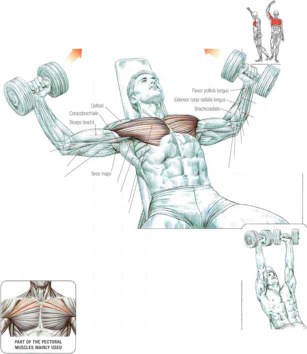 Incline Dumbbell Flys Abdominal Muscles Fitness Vip