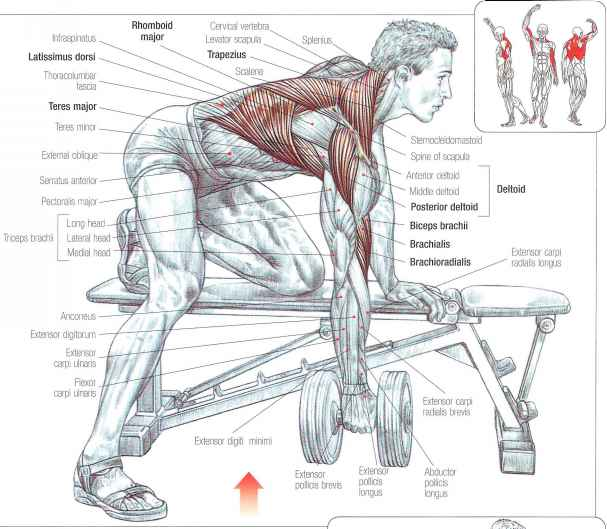 Seated Rows J Abdominal Muscles Fitness Vip