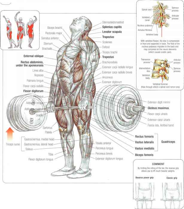 Sumo Deadlifts Abdominal Muscles Fitness Vip
