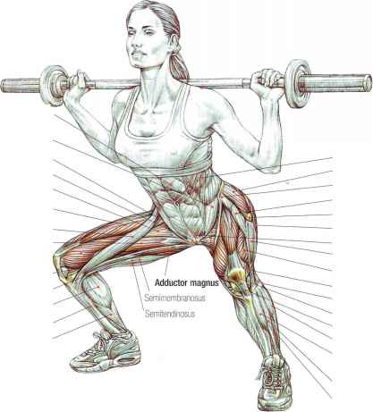 Power squats - Abdominal Muscles - Fitness VIP