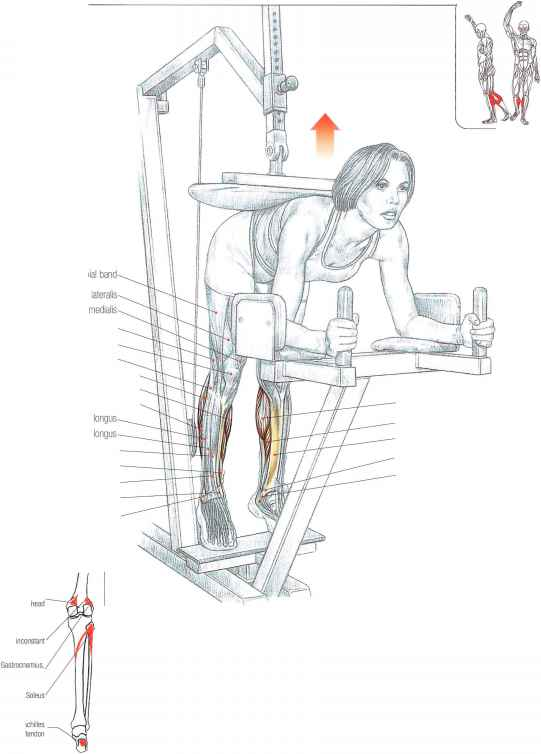 Triceps Surae Strengthening