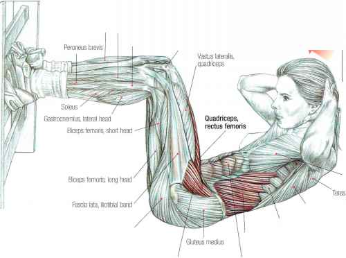 GYM LADiE Situps Abdominal Muscles Fitness VIP