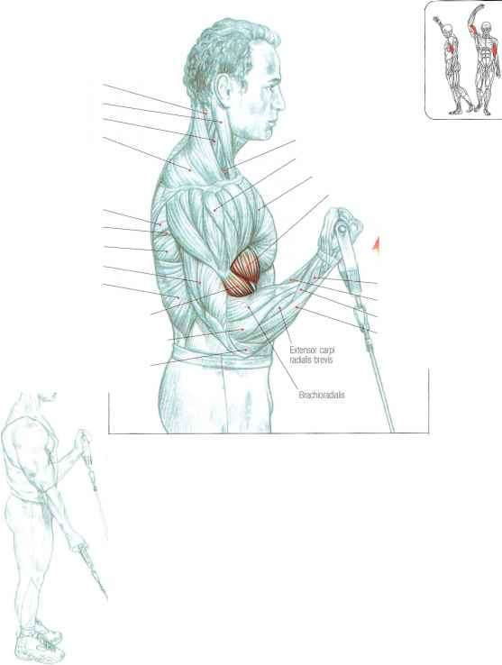 Longus Abductor Exercises