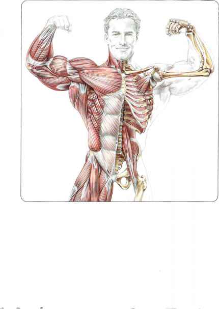 Core Training Serratus Dorsi