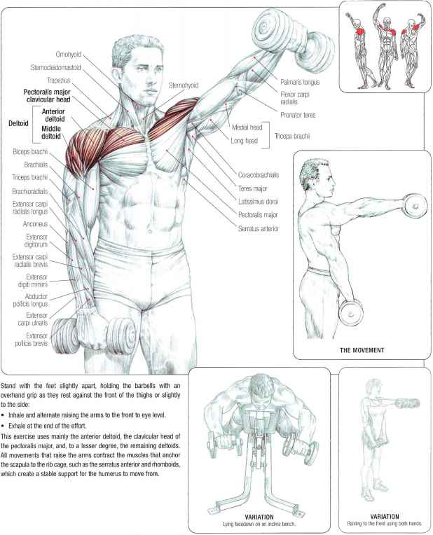 Deltoid Arm Raise