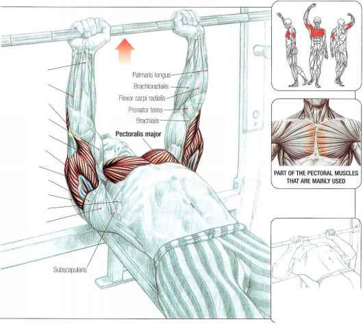 Arm Extension Muscles Surgery