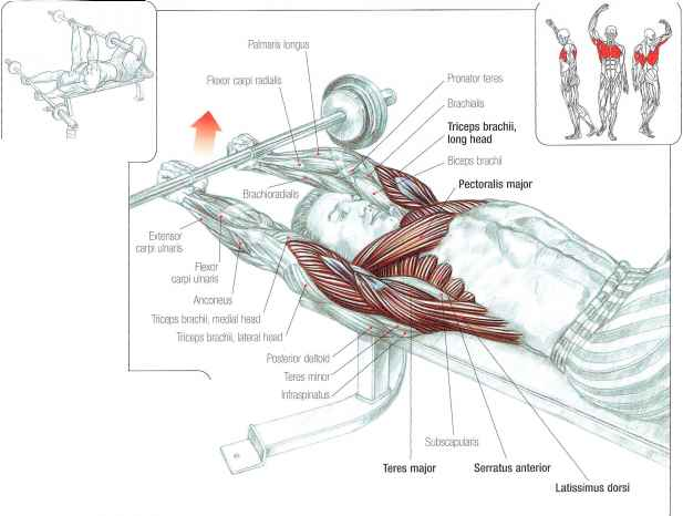 Long Head Biceps Tendon Lateral View