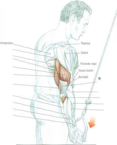 Tricep Lateral Head Exercises