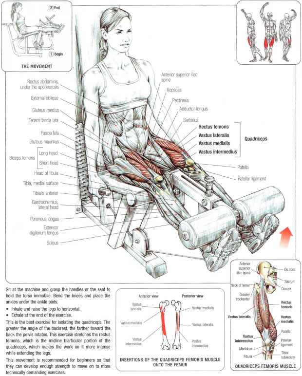 Tibialis And Peroneus Stretches